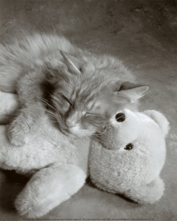 I Want You To Be My Teddy Bear.